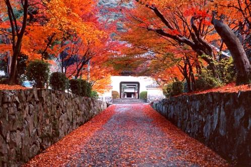 お寺へと繋がる山道